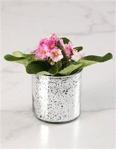 plants: African Violet Surprise Gift!