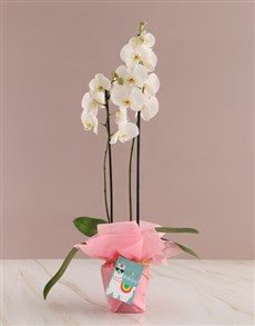 flowers: Pretty in Pink Birthday Orchid!