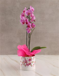 plants: With Love Pink Orchid!