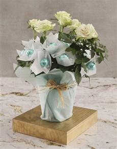 plants: White Rose Bush And Chocolates!