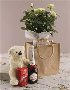 plants: White Rose Bush Gift Hamper!