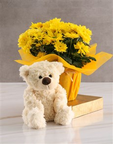 flowers: Sunny Chrysanthemum Plant!