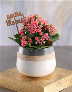 gifts: The Best Cerise Kalanchoe Plant!