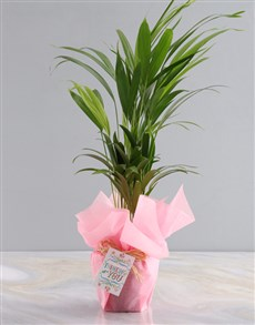 plants: Thoughts Of You Areca Bamboo Planter!