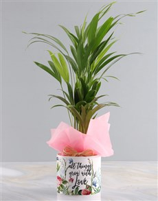 gifts: Areca Bamboo Planter Growing With Love!