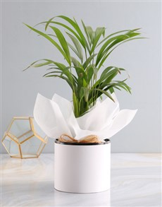 gifts: Areca Bamboo Planter!