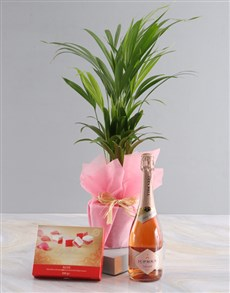 plants: Areca Bamboo Planter With Sweet Delights!