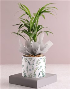plants: Areca Bamboo Planter In Pattern Pot Sleeve!