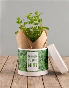 plants: Marvellous Mint in Hatbox!