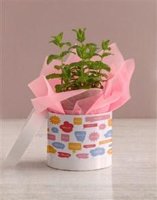 plants: Hello Herb in Pastel Hatbox!