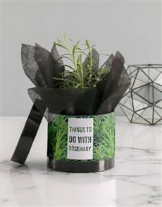 plants: Rosemary Plant in Hatbox!