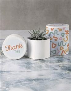 plants: Gratitude Succulent in Hatbox!