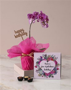 plants: Midi Pink Orchid Birthday Gift!