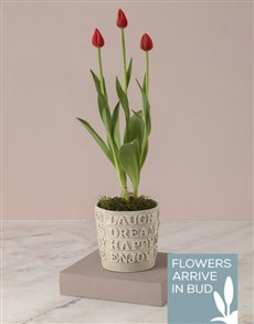 flowers: Tulips Of Positive Vibes!