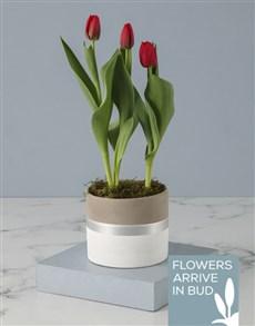 flowers: Rustic Tulip Pot Plant!