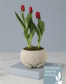 plants: Adorable Red Tulip In Mojo Pot!