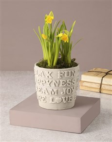 flowers: Kind Words Rustic Potted Daffodil!