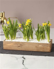 plants: Born From Stone Daffodil Crate!