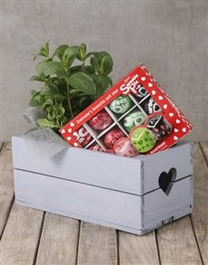 plants: Herb and Sweetie Pies Crate!