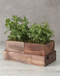 plants: Mixed Herbs Wooden Containers!