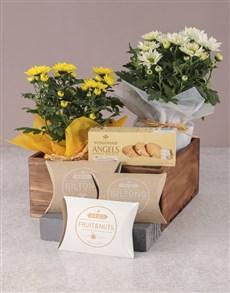 flowers: Duo of Chrysanthemum Gourmet Gift Set!