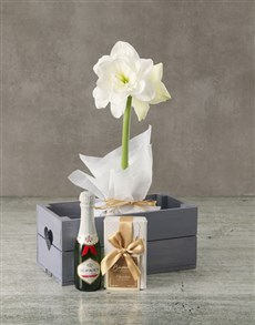 plants: White Amaryllis Chocolate Hamper in Heart Crate!