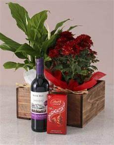 plants: Spathiphyllum and Chrysanthemum Gift Hamper!