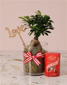 plants: Love Bonsai And Lindt!