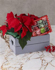flowers: Sweetie Pie Poinsettia Hamper!