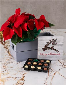 gifts: Chocolate and Poinsettia Christmas Hamper!