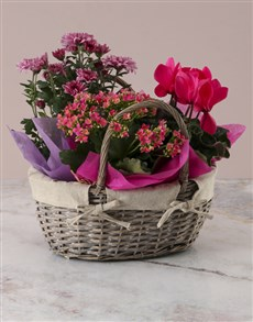 flowers: Pink Cyclamen Floral Basket!