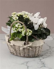 flowers: White Cyclamen Floral Basket!