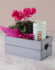 flowers: Cerise Cyclamen And Nougat Crate!