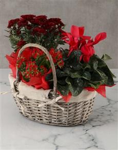 flowers: Red Chrysanthemum Floral Basket!