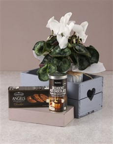 flowers: White Cyclamen Gourmet Crate!