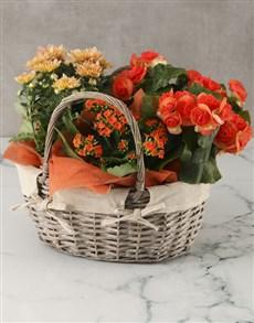 flowers: Orange Blooms Basket Arrangement!