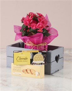 plants: Pink Begonia With Biscuits Heart Crate!