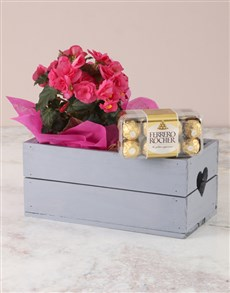 plants: Pink Begonia with Chocs Heart Crate!