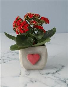 flowers: Red Kalanchoe In Heartfelt Pot!