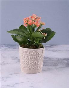 flowers: Orange Words Of Wisdom Kalanchoe!