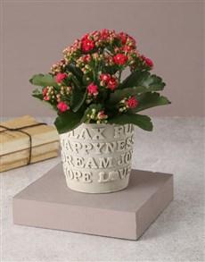 flowers: Cerise Words Of Wisdom Kalanchoe!