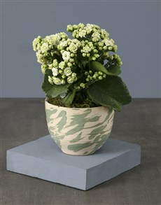 plants: White Kalanchoe In Marble Pot!