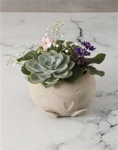 flowers: African Violet Garden In Mojo Pot!