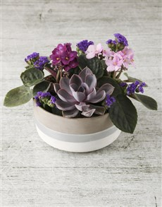 plants: African Violet Garden in Rustic Pot!
