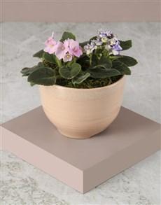 plants: African Violets In Pink Ceramic Pot!