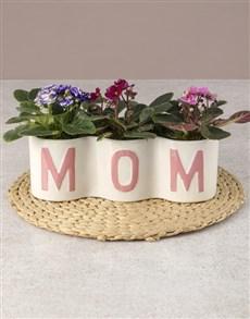 plants: Moms Love African Violets!