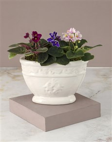 plants: African Violets In Chic Ceramic Pot!