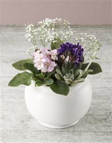 plants: African Violet Pottery Garden!