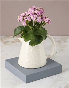 plants: Pink Kalanchoe In Jug!