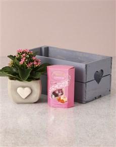plants: Heartfelt Kalanchoe Hamper!